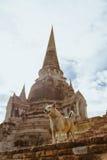 Ein Hund, der thailändischen Tempel in Ayudhya, Thailand schützt Stockbild