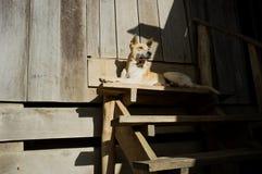 Ein Hund, der vor einem Dorfhaus legt Lizenzfreies Stockbild