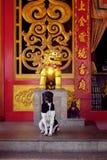 Ein Hund in einem chinesischen Tempel Stockfotografie