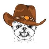 Ein Hund in einem Cowboyhut Yorkshire Terrier Auch im corel abgehobenen Betrag Lizenzfreies Stockfoto