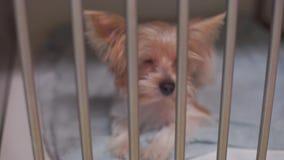 Ein Hund in einem Eisenkäfig stock video