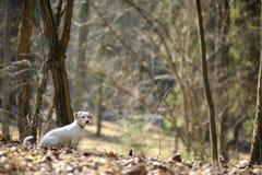 Ein Hund in einem Frühlingswald Stockfoto