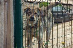 Ein Hund in einem Käfig Stockfotos