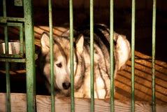 Ein Hund in einem Käfig Stockfotografie