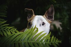 Ein Hund in einem mysteriösen Wald Stockfotografie