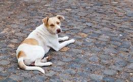 Ein Hund in einer Straße mit einem Kettenkragen Lizenzfreie Stockfotografie