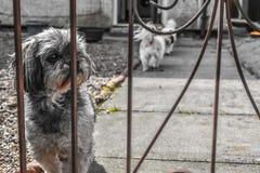 Ein Hund fühlt sich traurig Stockfoto