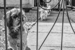 Ein Hund fühlt sich traurig stockbild