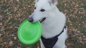 Ein Hund hält einen Frisbee in seinen Zähnen stock video footage