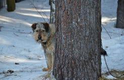 Ein Hund hinter einem Baum Lizenzfreie Stockbilder