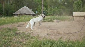 Ein Hund im Dorf am Rand des Waldes wird mit der Ankunft des Eigentümers gefallen und wedelt sein Endstück landwirtschaftlich stock footage
