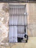 Ein Hund im Fenster Stockfotos