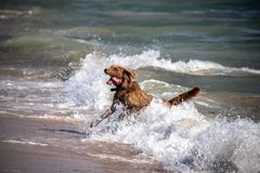 Ein Hund im Meer in Tarifa Spanien stockfotos