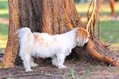 Ein Hund im Park Lizenzfreie Stockbilder