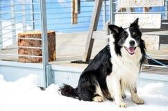 Ein Hund im Schnee Stockfotografie