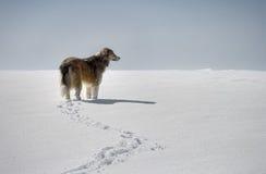 Ein Hund im Schnee Stockfoto