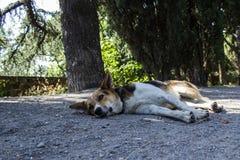 Ein Hund liegt auf der Straße Stockfoto