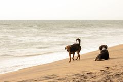 Ein Hund liegt auf einem sandigen Strand Lizenzfreie Stockfotografie