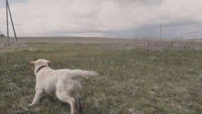 Ein Hund mit einem Frisbee stock video footage