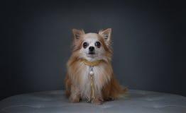 Ein Hund mit einem Kragen stockbild