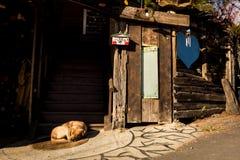 Ein Hund schläft vor einem Eingang eines Hauses lizenzfreie stockbilder
