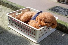 Ein Hund steht am Sommertag still lizenzfreies stockbild