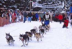 Ein Hundeschlittenteam beginnt das Rennen Lizenzfreie Stockfotografie