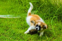 Ein Hundespielen Stockbilder