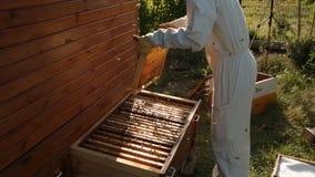Ein Imker in einem weißen Schutzanzug entfernt Bienen von einem Holzrahmen mit Bienenwaben in einen hölzernen Bienenstock stock video