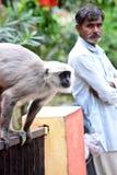 Affe und Mann Stockfotos
