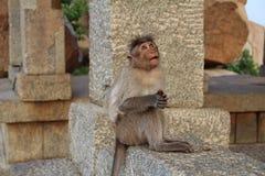 Ein indischer Makakenaffe unter alten Ruinen von Hampi Lustiger Makaken Der Affe meditiert auf einem Stein in Hampi, Karntaka-Zus Lizenzfreie Stockbilder