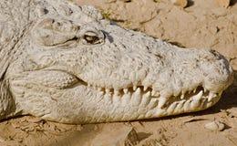 Ein indisches Krokodil Stockbilder