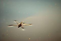 Ein Insekt Lizenzfreies Stockbild