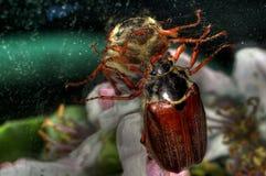 Ein Insekt Stockbild