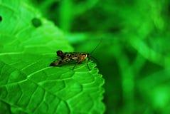 Ein Insekt auf einem grünen Blatt Lizenzfreies Stockfoto