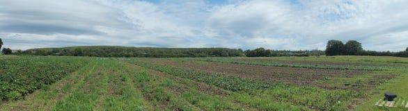 Ein irisches Feld im frühen Frühling Lizenzfreies Stockfoto