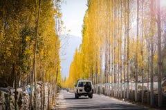 Ein Jeep auf der Straße unter Bäumen der gelben Pappel stockbild