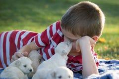 Ein Junge, der auf eine Decke spielt mit nettem kleinem legt, bräunen Welpen lizenzfreie stockfotografie