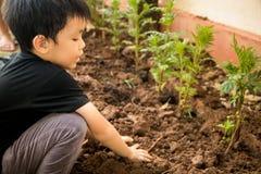 Ein Junge, der sitzt, um Bäume im Loch mit seinen Händen zu pflanzen Stockbild