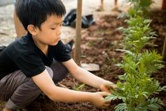 Ein Junge, der sitzt, um Bäume im Loch mit seinen Händen zu pflanzen Lizenzfreie Stockfotos
