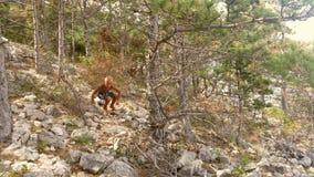 Ein Junge in einem midterranian Wald in Kroatien Stockbilder