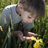 Ein Junge im Garten Stockfotografie