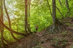 Ein Jungenreisender mit Wanderstockwege entlang einer Spur in einem dichten grünen Wald im Sonnenunterganglicht stockfotos