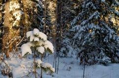 Ein junger Baum Stockfoto
