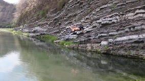 Ein junger Mann springt mit einer Drehbeschleunigung zu einem Teich des Trinkwassers im Puyango-Fluss stock video footage