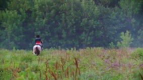 Ein junger Reiter auf einem Pferd, das in Richtung zum Wald, umgeben durch die schöne Natur galoppiert stock footage