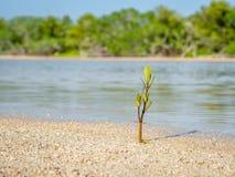 Ein junger Schössling, der auf dem Ufer von einem kleinen See wächst stockfotografie