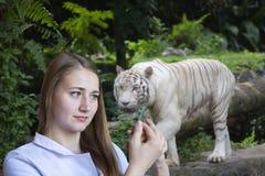 Ein junger weiblicher Biologe auf dem Hintergrund eines Vogelhauses mit einem Bengal-Tiger lizenzfreies stockfoto