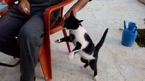 Ein junges, gesundes, Katzenspringen von durchschnittlicher Größe stockbild