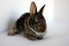 Ein junges Kaninchen Lizenzfreies Stockfoto